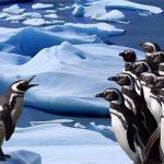 Penguins Slide