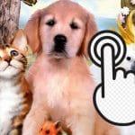 Pets Clicker